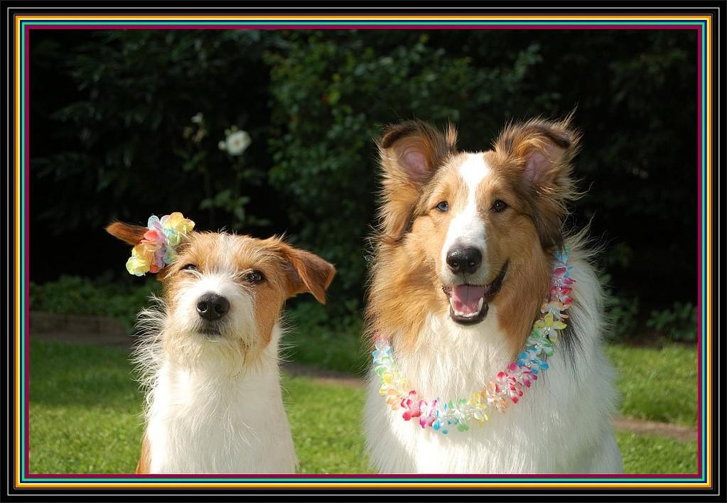 """09.07.2012  """"Aloha, wir haben Ferien!!"""""""