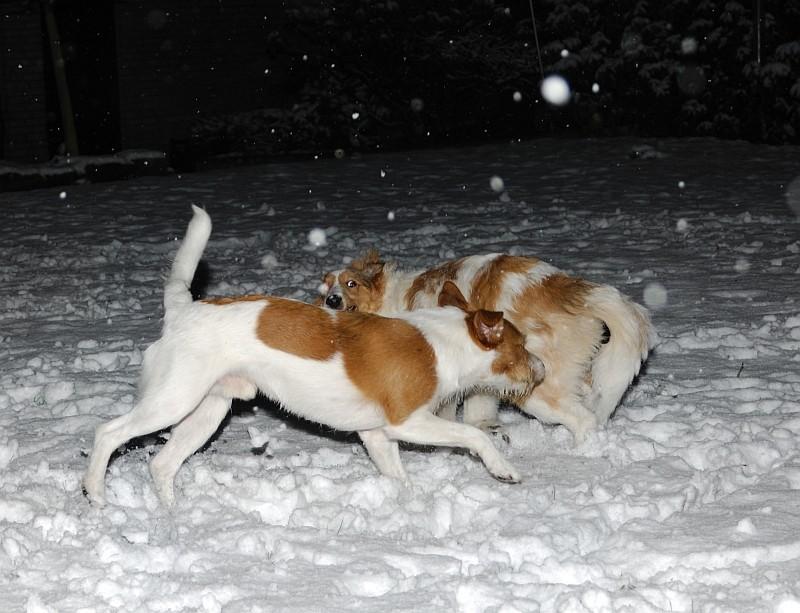 20. 12. 2011  07:00 Uhr, toben im ersten Schnee