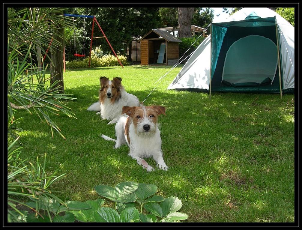 """10.06.2012  """"Bis unser >Garten-Hunde-Haus< fertig ist, beziehen wie die Steilwandlaube."""""""