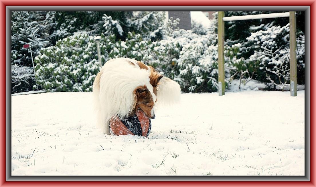 """""""Mittags und es schneit noch immer, ich teste den >Schneeball< . """" ;-)"""