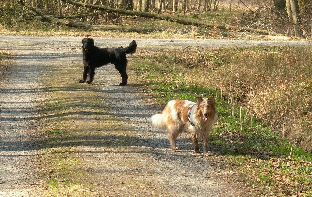 26.03.2012  Retti und Kumpel im Geisterholz, kein Schlammloch war zu groß ;-)