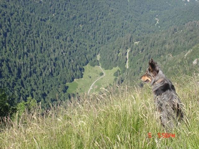 Valto en montagne