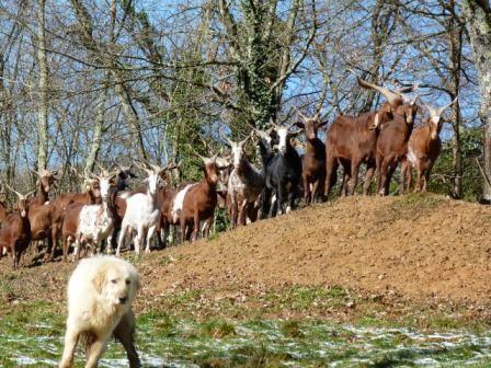 Hadja et les chèvres au soleil
