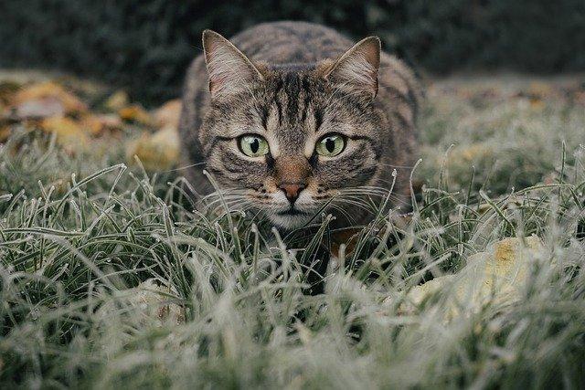 Der Jagdtrieb einer Katze
