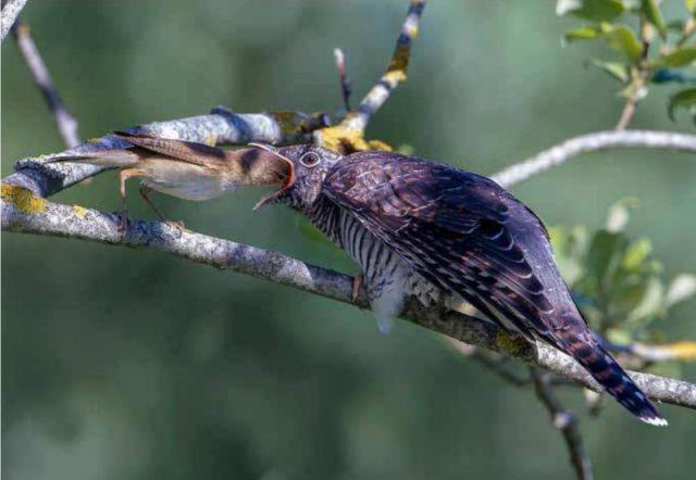 Samantha und andere seltene Vögel