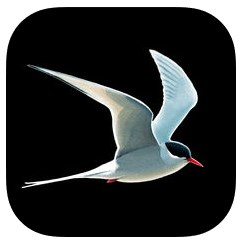 Der Kosmos Vogelführer - App