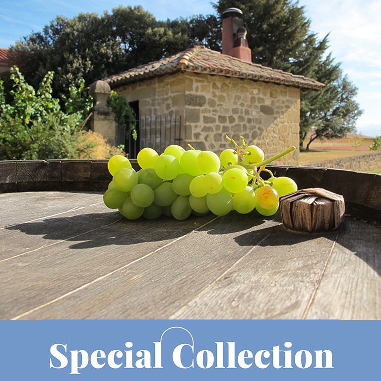 Special Collection: Weinreise Rioja