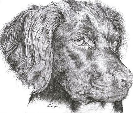 Portrait Hund Bleistift
