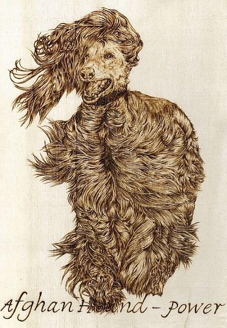 Afghanischer Windhund, Pappelholz
