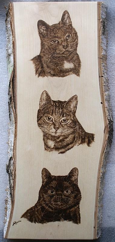 3 Katzen, Tierportrait in Brandmalerei, Birkenholz