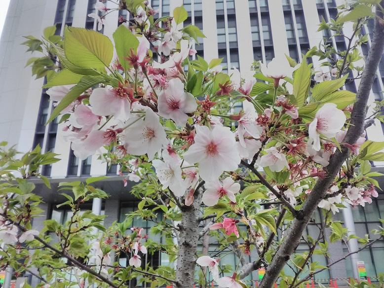 堺で「春のお花見気分」です