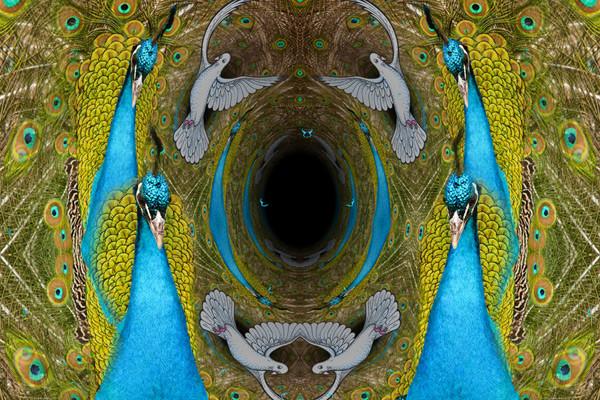 CD artwork Wildcat