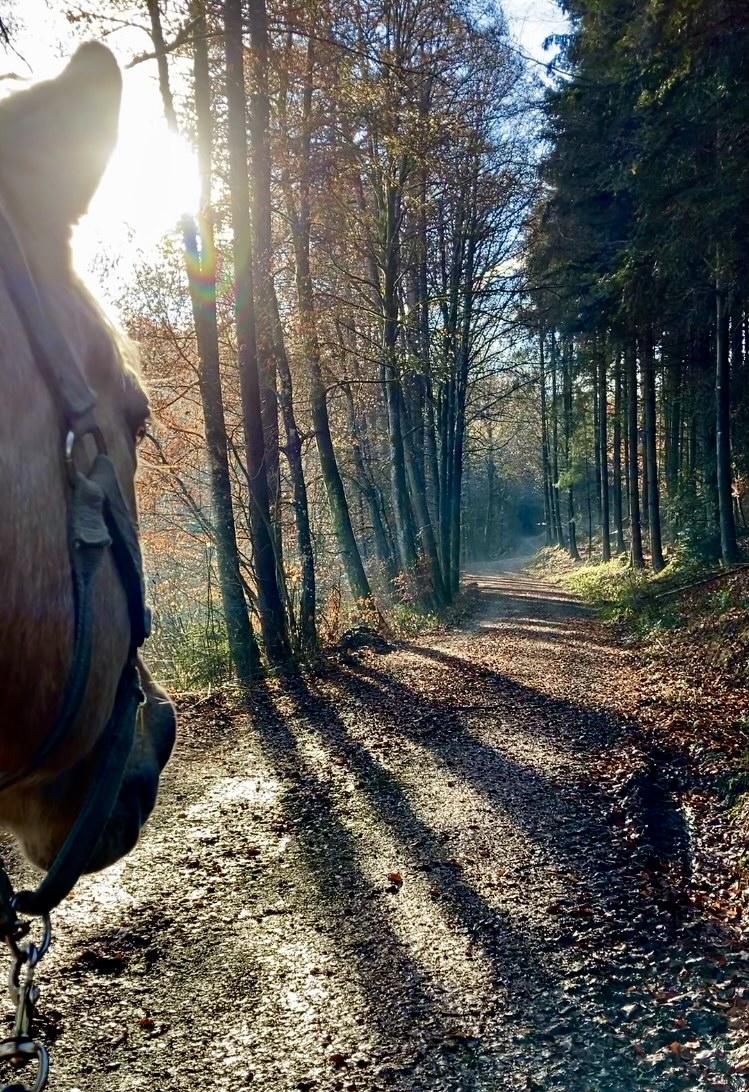 Horsemanship - Was ist das für Dich?