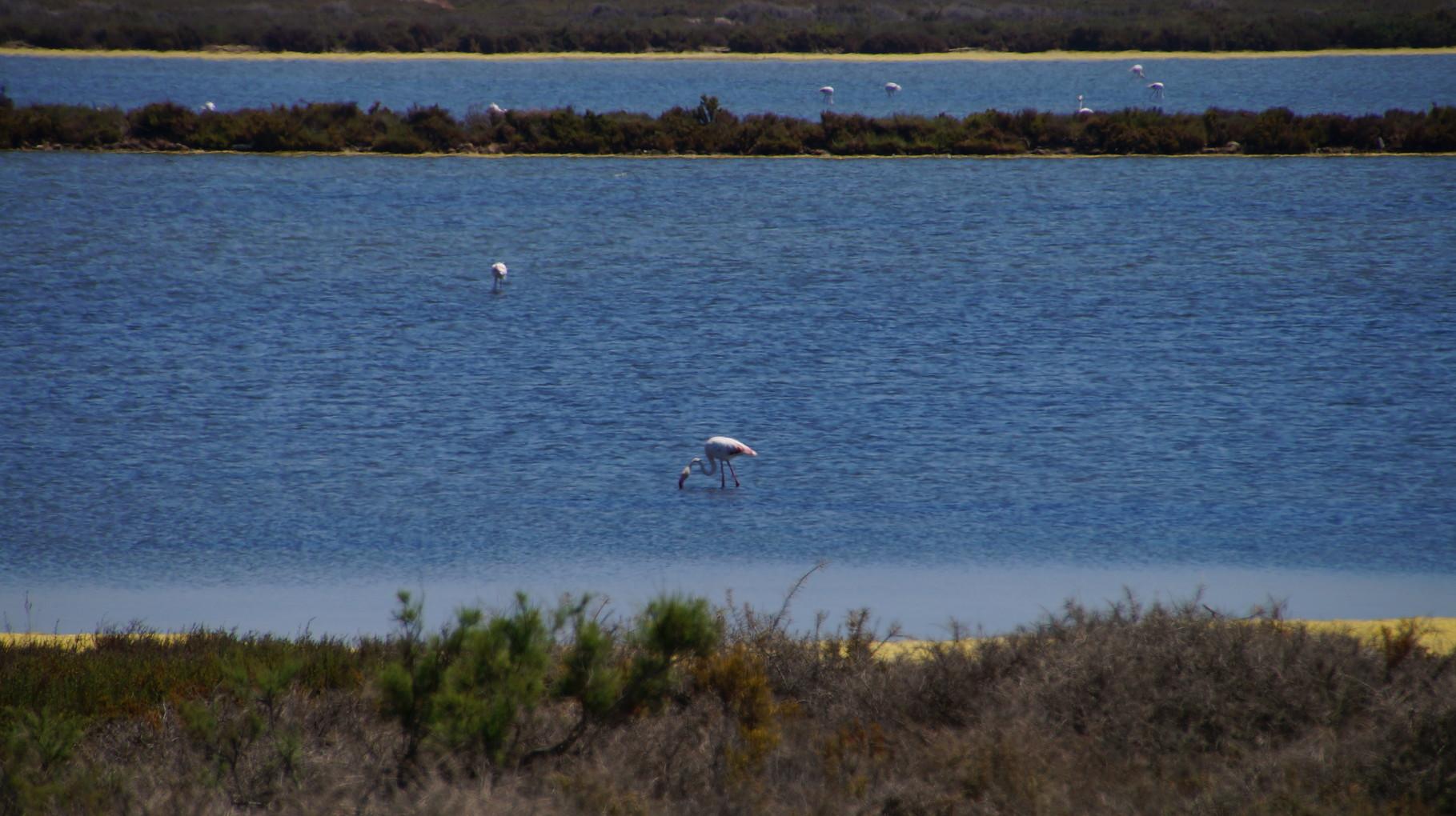 """<B>Flamingos brüten in der nahegelegenen """"Reserva de las Salinas"""".</B>"""