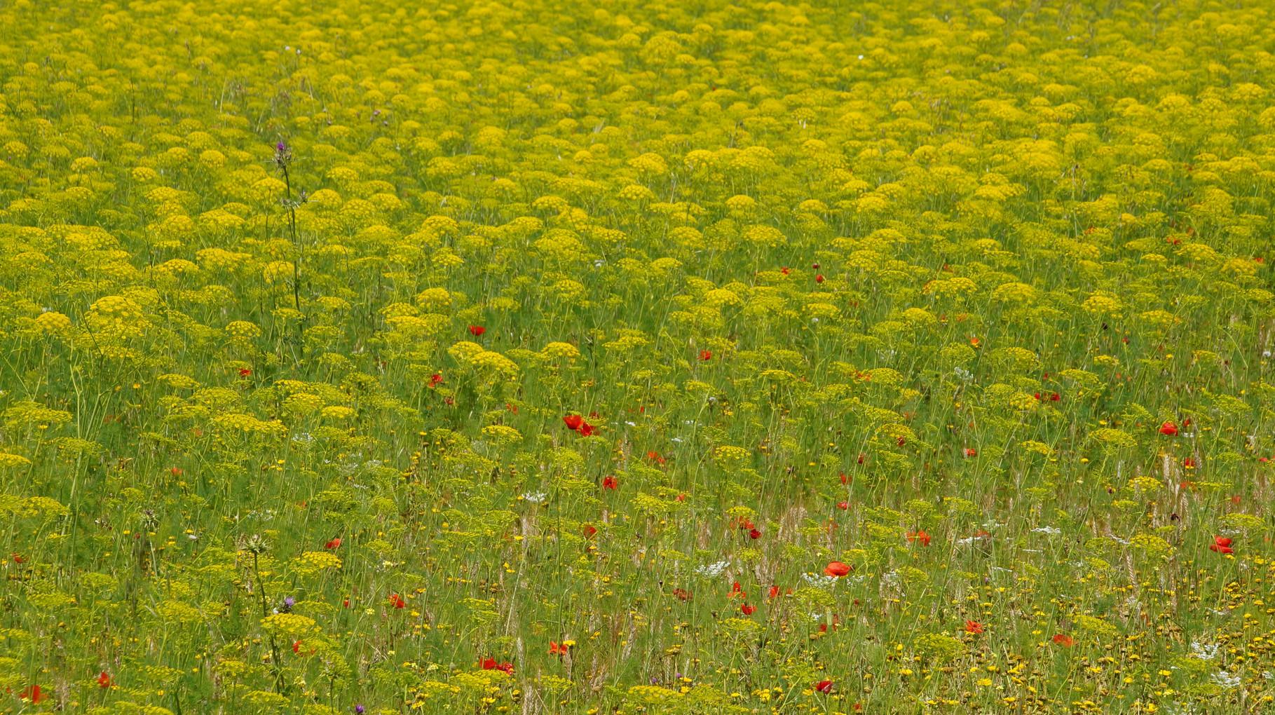 <B>Kräftige Farben und wärmende Sonnenstrahlen, damit kitzelt Andalusien alle Sinne wach.</B>