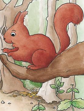 Porträt Timy, das Eichhörnchen