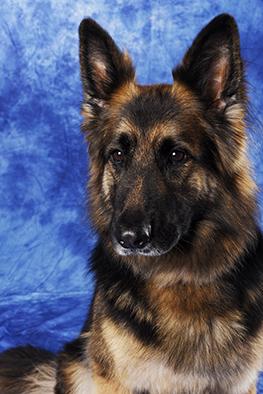 Hunde Portrait Basel, Tierfotos Baselland, Fotostudio Basel, Tierfotos, Hundefotos, Hundeportrait
