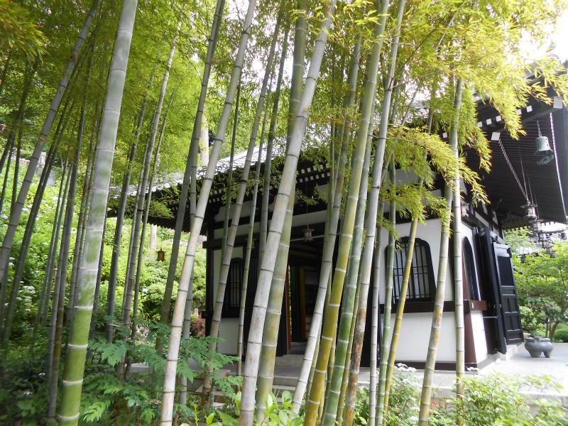 アジサイ散策路を降りた経堂裏手の竹林
