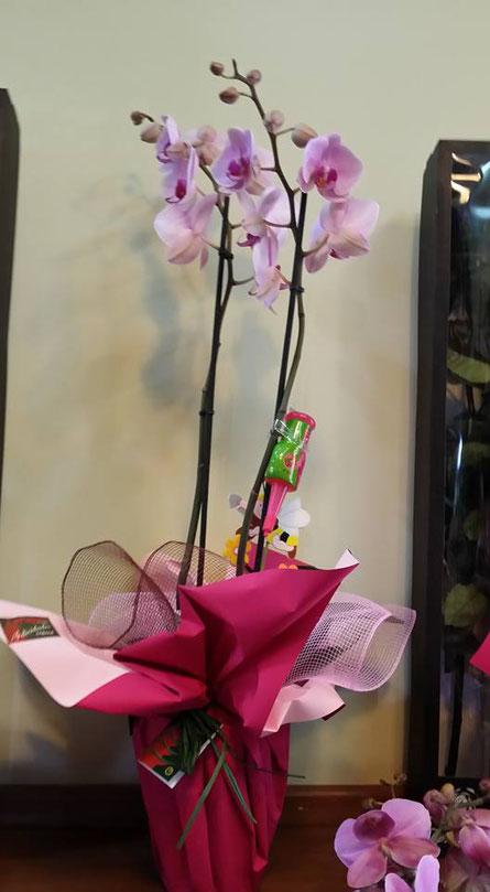 Envíamos   a domicilio  tu regalo de cumpleaños : Una Orquídea Phalaenopsis  preparada .