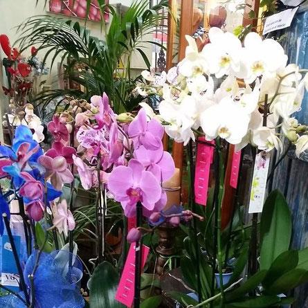 Te ofrecemos un gran surtido de orquídeas.