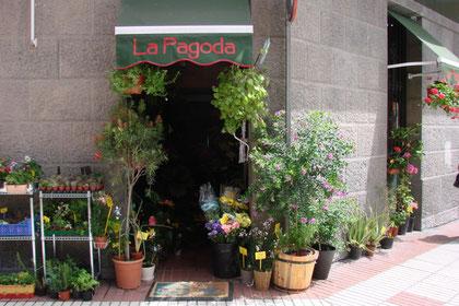 Entrada de la floristería La pagoda .