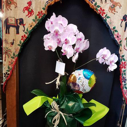 Orquídea Phalaenopsis  preparada personalizada con globo de felicidad.