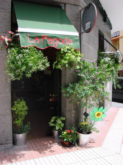 Bienvenido , visita on line la floristería las pagoda  .