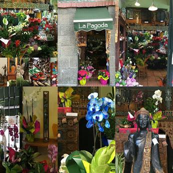 Disponemos de una gran variedad de orquídeas: phalaenopsis azul , cymbidium,  orquídeas vandas azul, oncidium,dendrobium nobile .