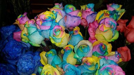 Rosas arco iris.