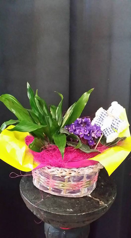 cesta de plantas con violeta y dracaena.