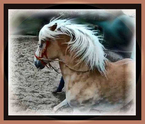 Zaum und Zaun – die Kunst der Begrenzung für Mensch und Pferd
