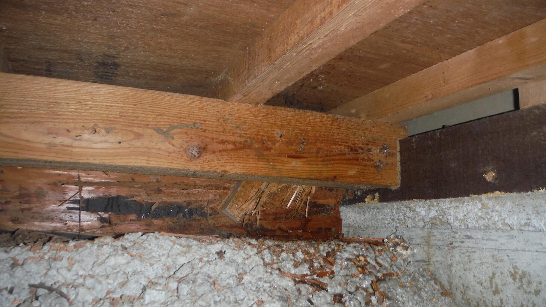 玄関周り木部に蟻道及び喰害痕