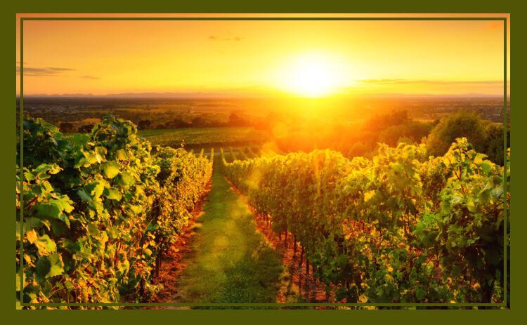 Beste Weinbaugebiete für Rot- &  Weißweine