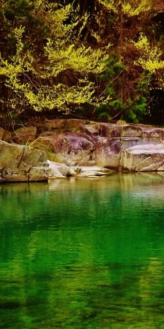 美しい芽吹き山菜料理たけのこ料理愛知岐阜県中津川市付知川河畔見所散策遊歩道苔地衣類山野草しょうじょうばかまさんさくりどうとさみずきもみじやまざくらすみれしでこぶし