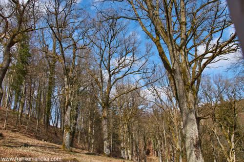 Hutanger im Wengleinpark