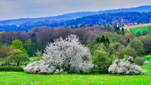 Altdorf wandern