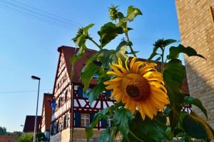 Wandern Nürnberger Land