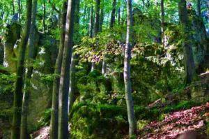 1000 Höhenmeter Weg Hersbrucker Schweiz