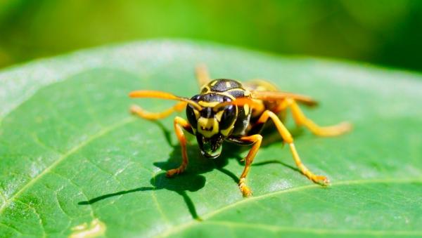 Hilfe bei Insektenstiche