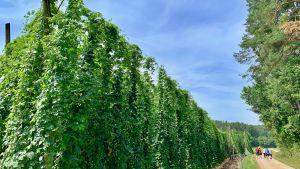 Bierwandern in Franken