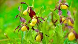 Orchideenweg Lichtenegg
