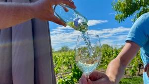 Wandern im Weinparadies