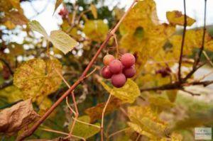 Herbstwanderung Frankenalb