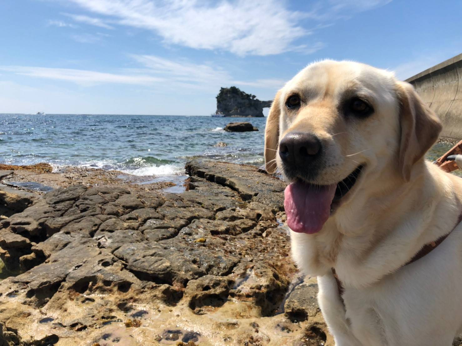 先週末 白浜へ遊びに行ったよ~  大阪府 メルちゃんと円月島