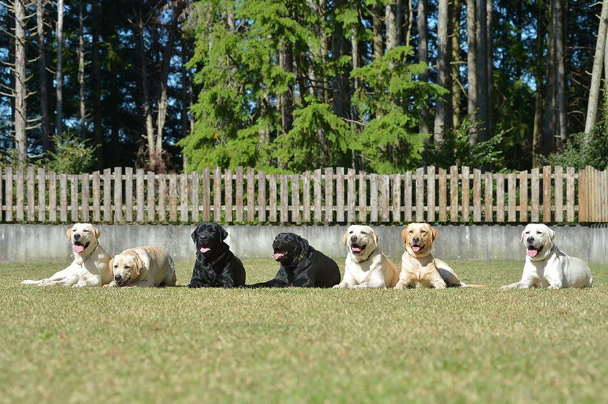 母犬となる犬達です