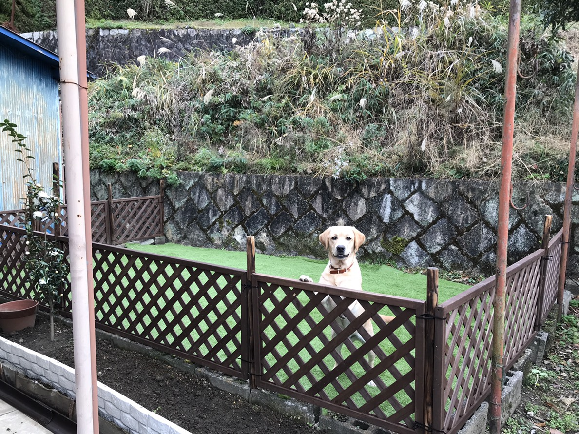 サニー君は、お庭にドッグランを作ってもらったよ!