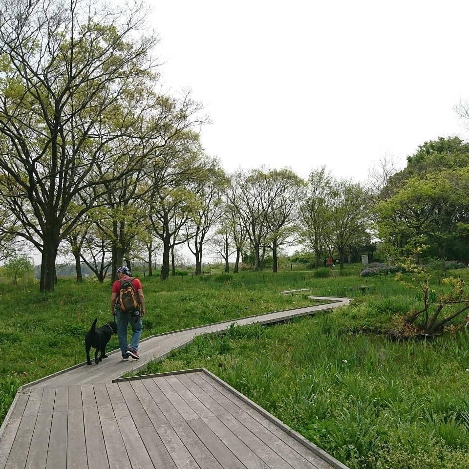 のんびりお散歩風景 河川環境楽園 誰でしょう~?