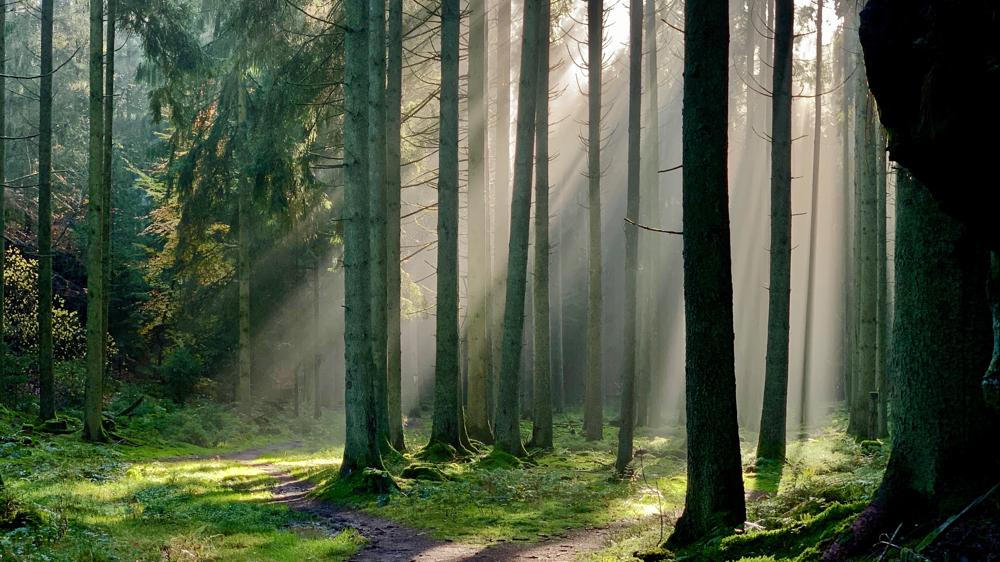 Bäume Wald Nebel