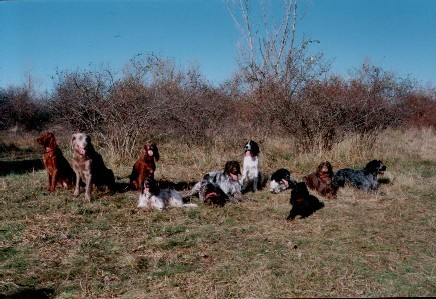 Breitenleer Jagdgesellschaft - 11 Hunde!