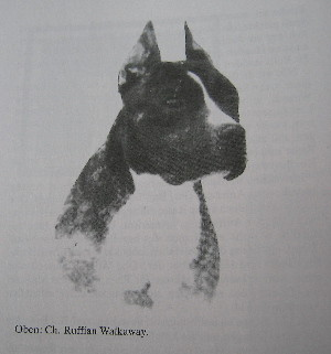 CH. Ruffian Walkaway